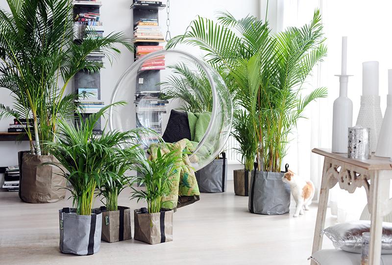plantas-vivienda